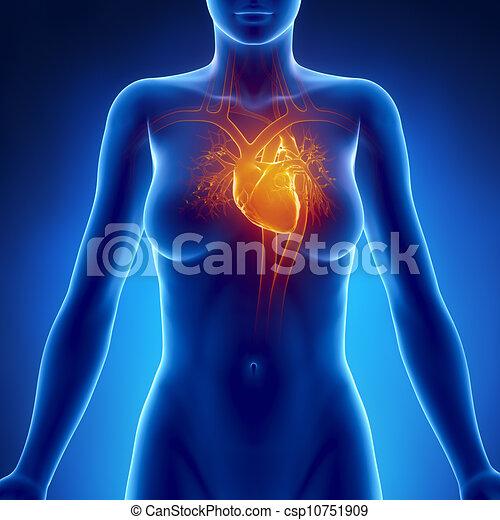 Anatomía, corazón, encendido, mujer.