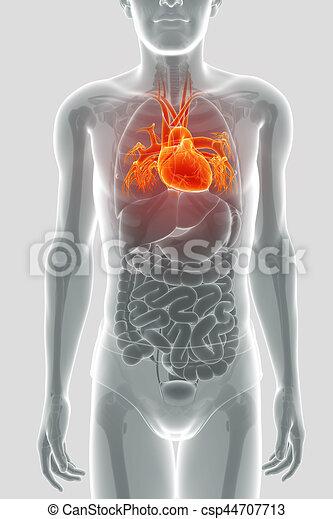 Anatomía, corazón, humano, render, 3d clipart - Buscar imágenes de ...
