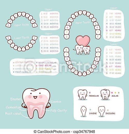 Anatomía, diente, gráfico, humano, caricatura. Grande, concepto ...
