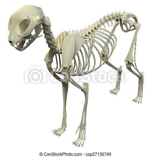 Anatomía, -, esqueleto, gato.