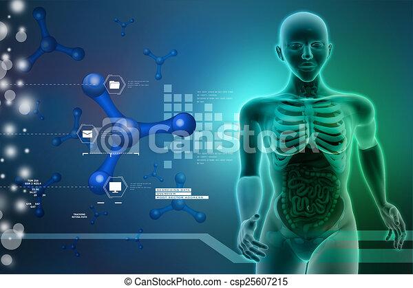 Anatomía, humano clipart - Buscar imágenes de ilustraciones, dibujos ...