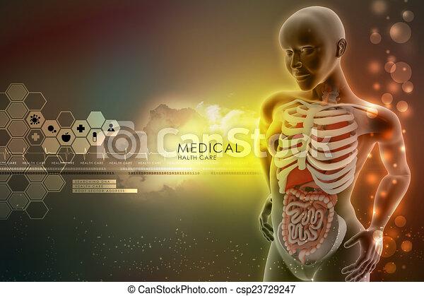 Anatomía, humano dibujo - Buscar imágenes de galería multimedia e ...