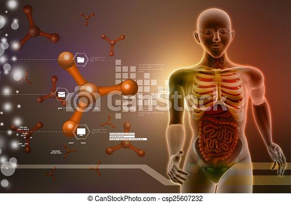 Anatomía, humano dibujos - Buscar imágenes de galería multimedia ...