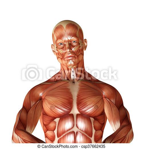 Anatomía, macho, muscular, render, 3d.