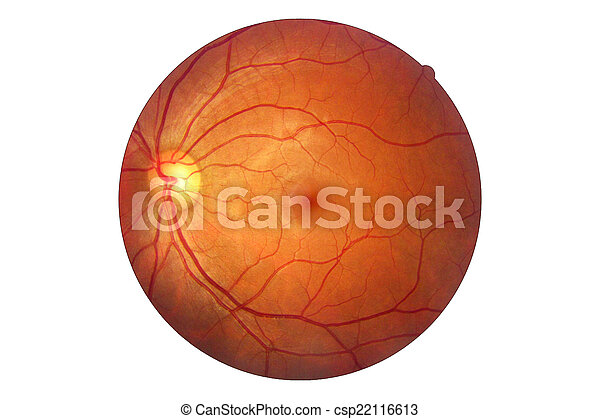Anatomía, ojo, óptico, retina, disco, arteria humana,... fotografía ...