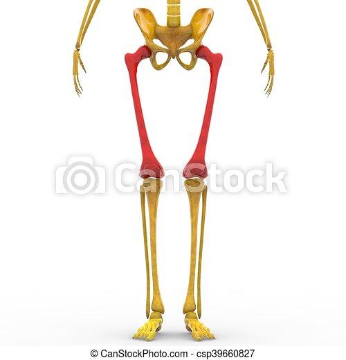 Anatomía, piernas, esqueleto, humano. Esqueleto, ilustración ...