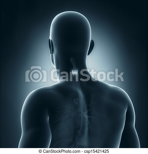 Anatomía, trasero, macho, vista clip art - Buscar imágenes de ...