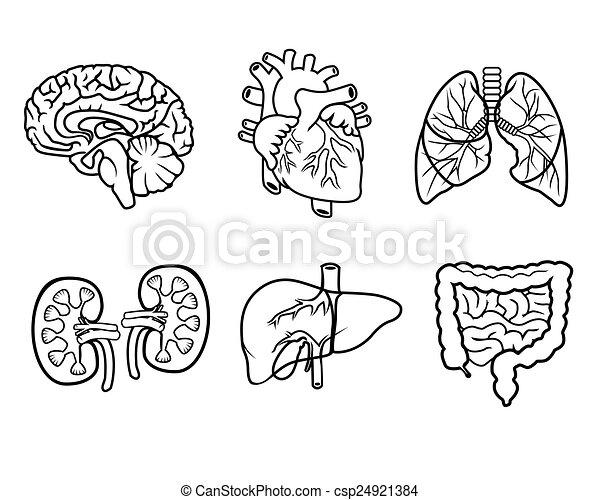 Anatomia 243 Rg 227 Os 205 Cones Anat 244 Mico Vetorial Pretas