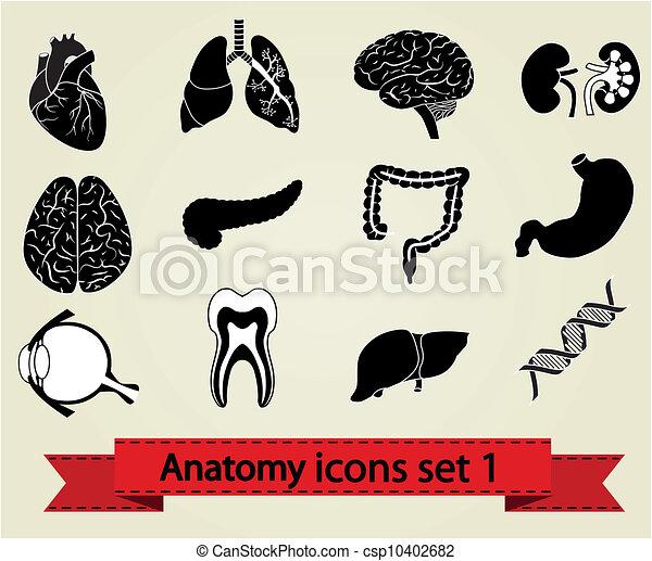 anatomia, 1, jogo, ícones - csp10402682