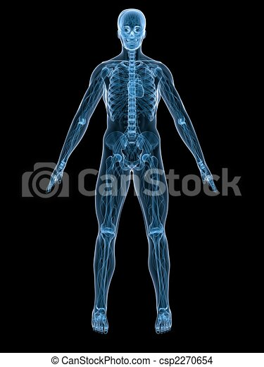 anatomia, umano - csp2270654