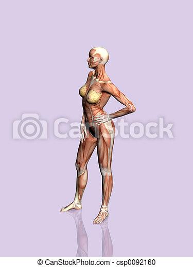anatomia, woman. - csp0092160