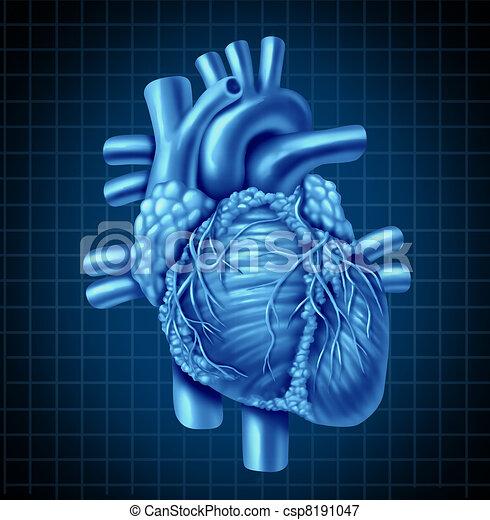 Anatomie coeur humain bleu coeur fond organ sain - Dessin du coeur humain ...