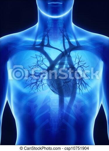 anatomie, coeur, rayon x - csp10751904