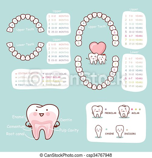 anatomie, dent, diagramme, humain, dessin animé - csp34767948