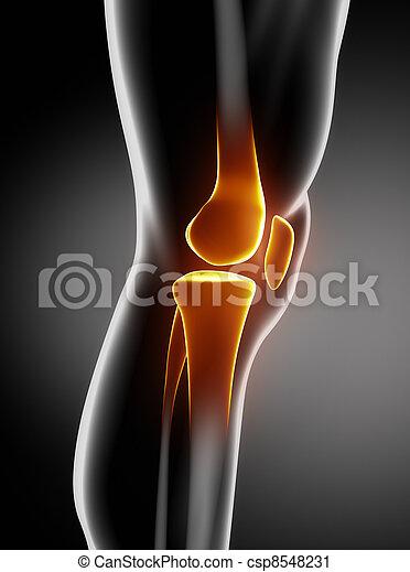 anatomie, genou, latéral, humain, vue - csp8548231