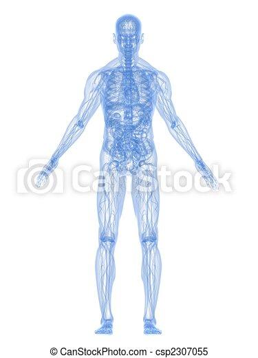 anatomie, menselijk - csp2307055