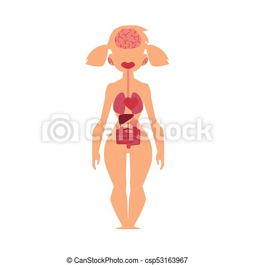 Anatomy chart, human internal organs, female body. Educational ...