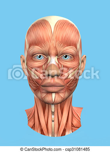 Anatomy front view of major face muscles of a woman including ...