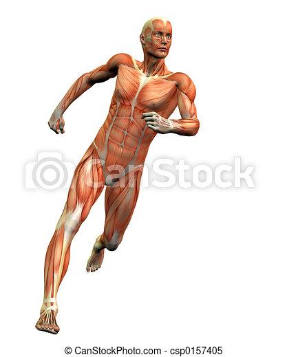 anatomy man #3 - csp0157405