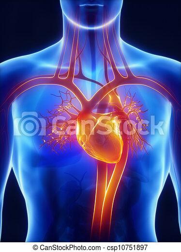 Anatomy of circulatory system - csp10751897