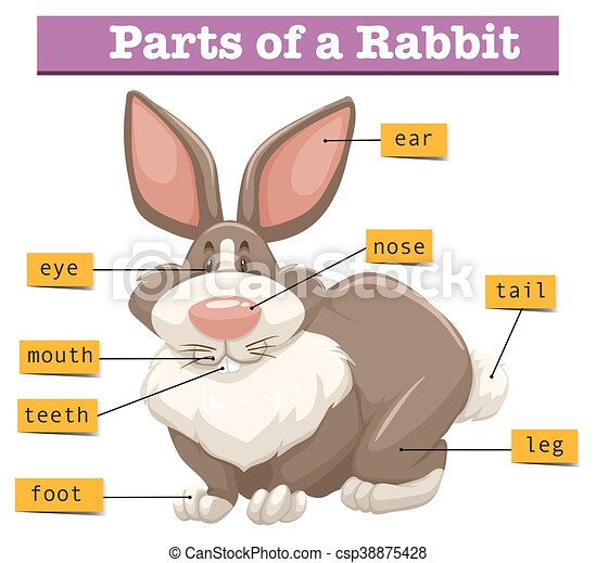 Anatomy of cute rabbit illustration.