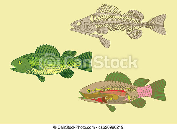 Zoology Anatomy Of Fish Cross Section And Skeleton
