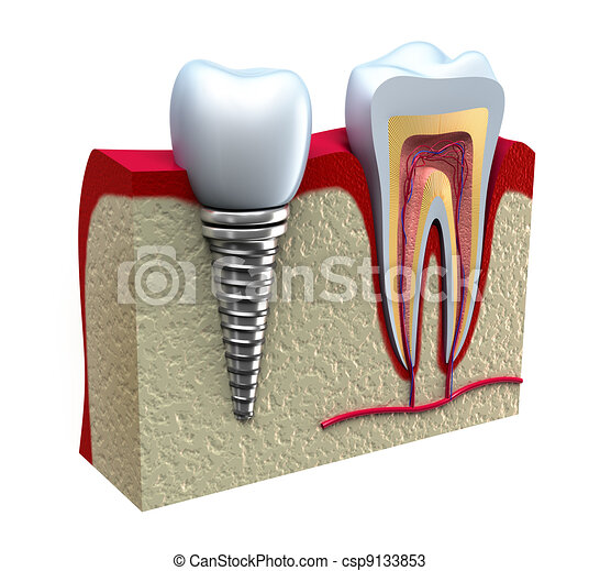 Anatomy of healthy teeth in details - csp9133853