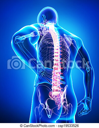 Anatomy of male back pain on blue - csp19533526