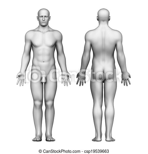 Anatomy of male body. 3d rendered illustration of male body anatomy.