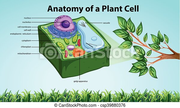 Anatomy Of Plant Cell With Names Illustration