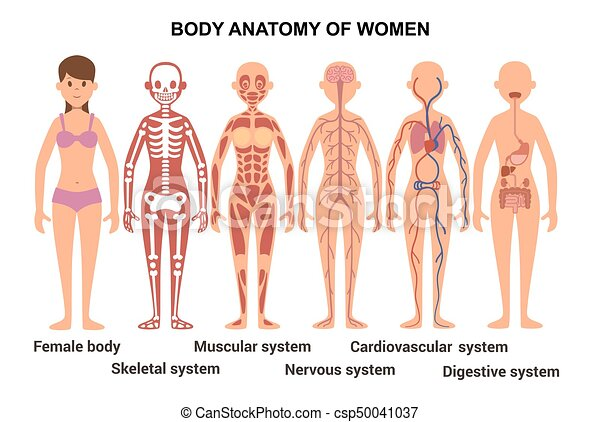 Anatomy of the female body. anatomical poster. skeletal and muscular ...