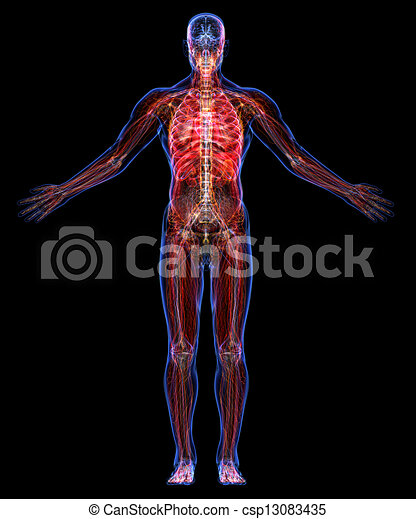 Anatomy Of The Human Body All Human Body Systems