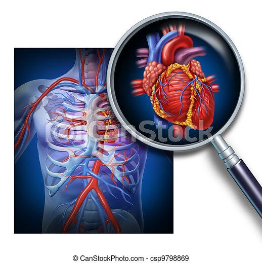 Anatomy Of The Human Heart - csp9798869