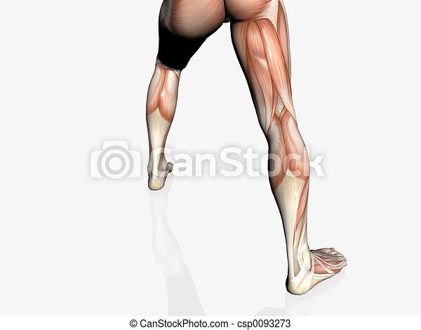 Anatomy Of The Man Muscular Man Anatomically Correct Medical Model