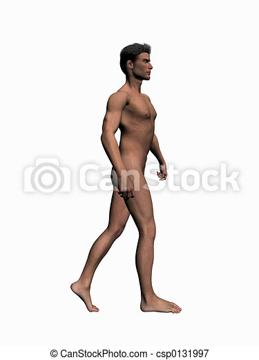 Anatomy Of The Man Walking 2 Anatomically Correct Model Of The