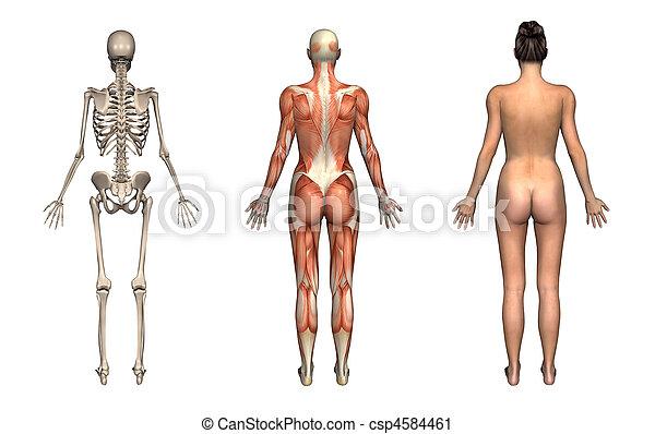 Anatomy Overlays - Female - Back - csp4584461