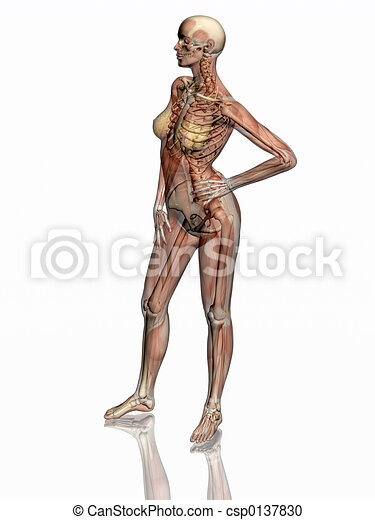 Anatomy, transparnt muscles with skeleton. - csp0137830