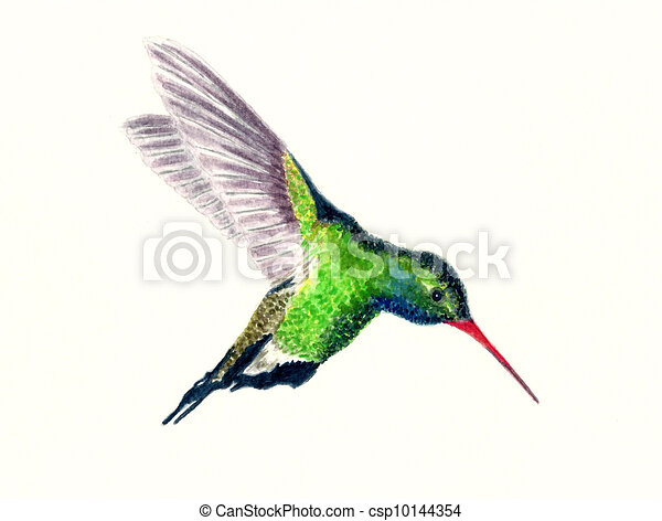 Colibris Stock Photo Images. 6.726 Colibris imagenes libres de ...