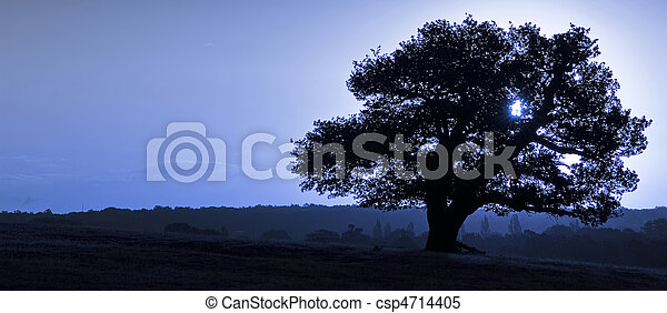Ancient English Oak silhouette at sunrise with blue tone for col - csp4714405