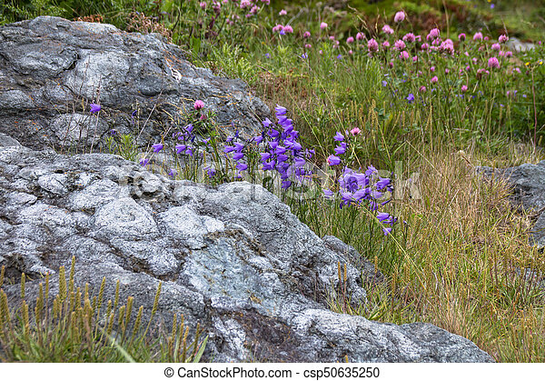 Ancient Pillow lava formations protecting wildflowers - csp50635250