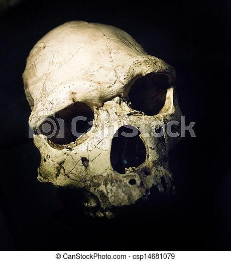 ancient skull - csp14681079