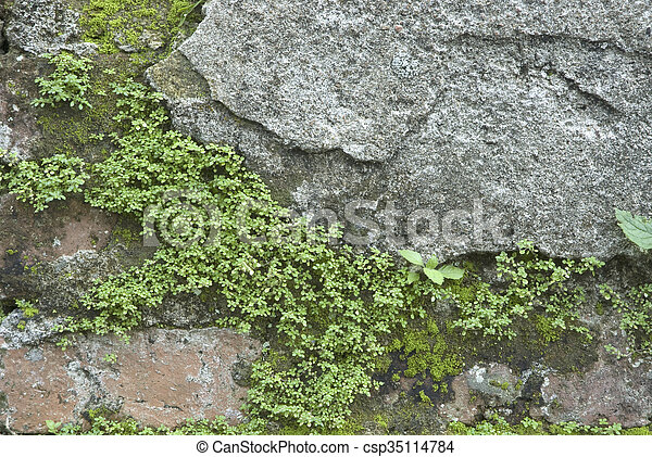 Ancient wall. - csp35114784