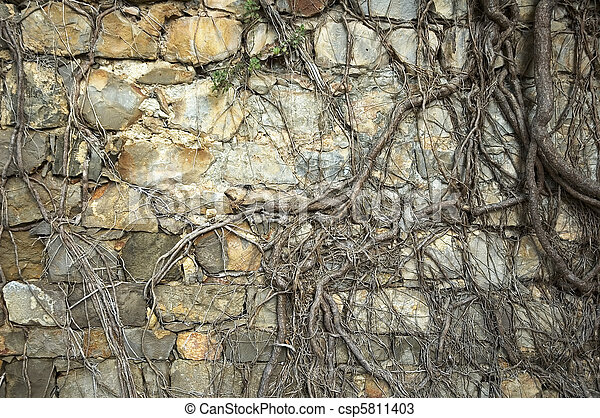 ancient wall with roots - csp5811403