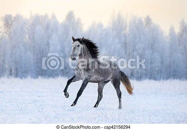 Andalusian horse on winter - csp42156294