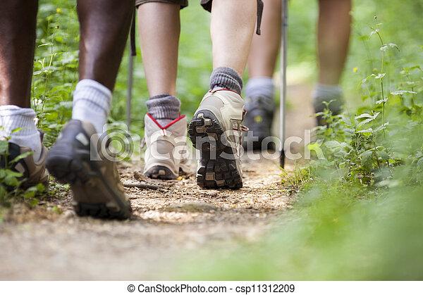 andar, sapatos, pessoas, madeira, trekking, fila - csp11312209