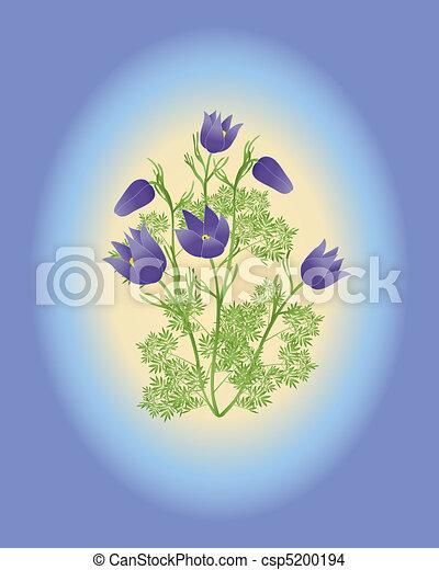 anemone pulsatilla vulgaris - csp5200194