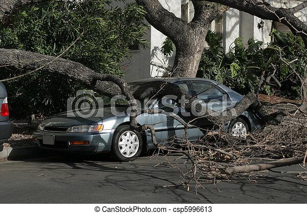 angeles, apanhado, car, após, árvore, storm., sob, caído, los, vento, california. - csp5996613