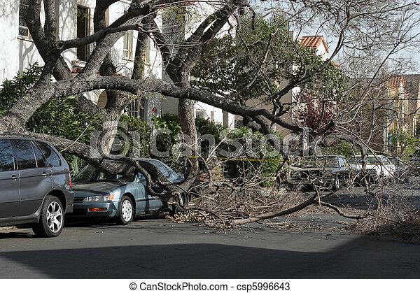 angeles, apanhado, car, após, árvore, storm., sob, caído, los, vento, california. - csp5996643