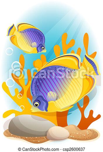 angelfish - csp2600637