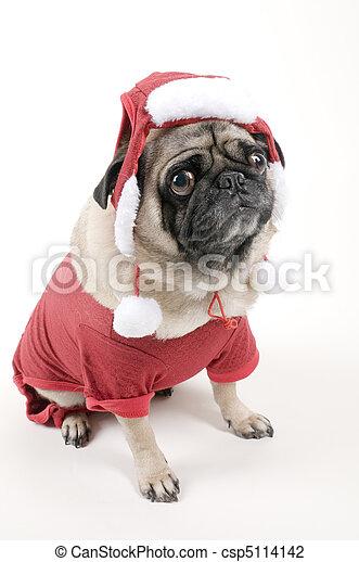Mops Bilder Weihnachten.Angezogene Mops Kostüm Weihnachten